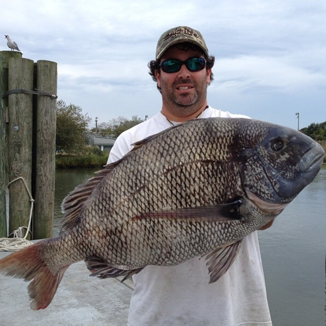 Dave Walker new State Record Sheepshead