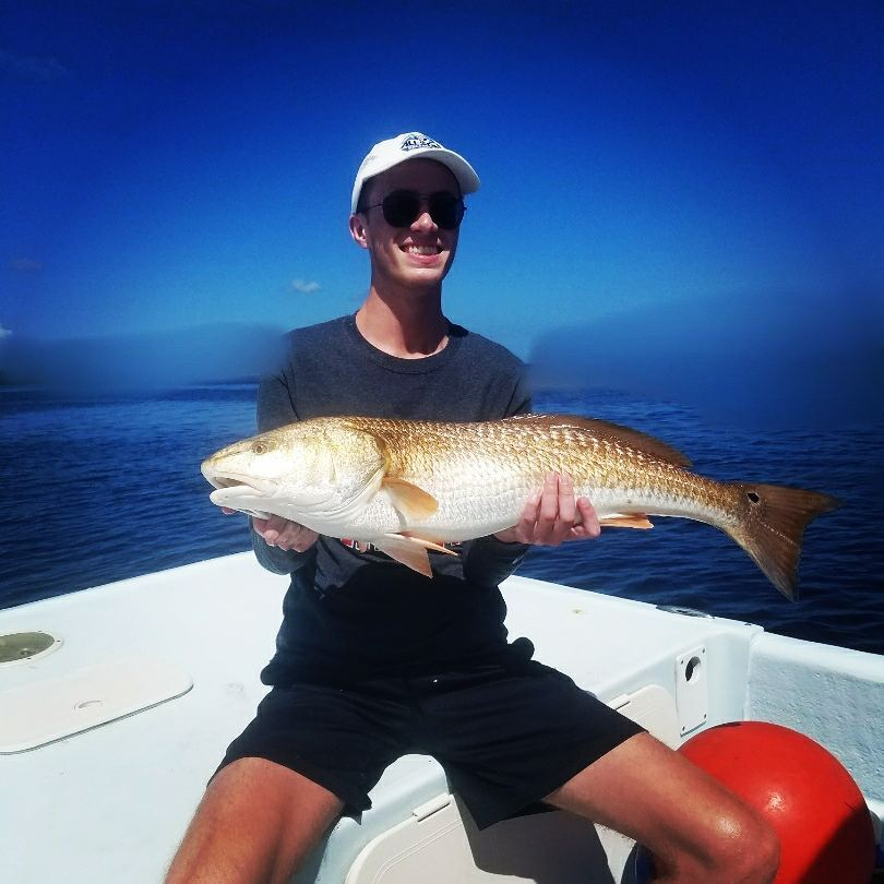 Got em! Sarasota bay loaded down with over slot Redfish.  ...