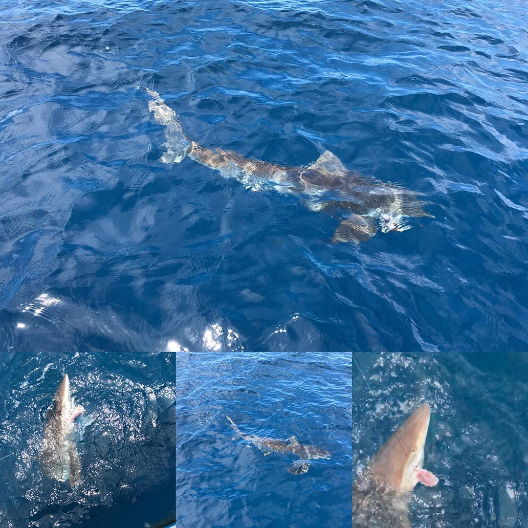 Jumped a black tip / spinner shark.  Till he got off.  Then. Played with this si...