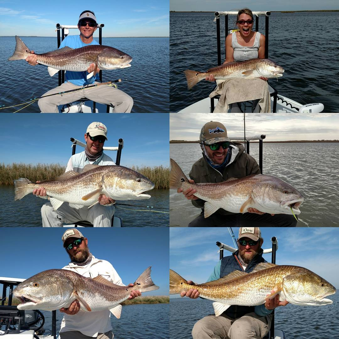 Louisiana Redfish season is right around the corner!  Looking forward to getting...