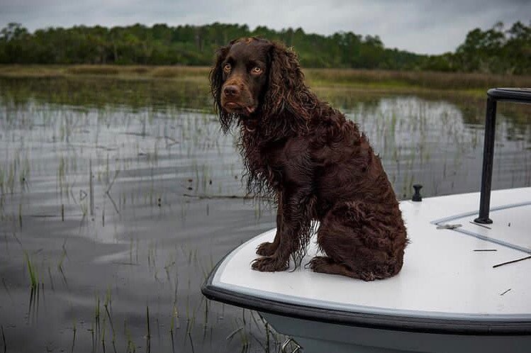 Nothing quite like a lowcountry skiff dog
