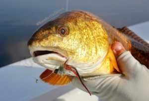 Redfish smiling nicely for the camera!