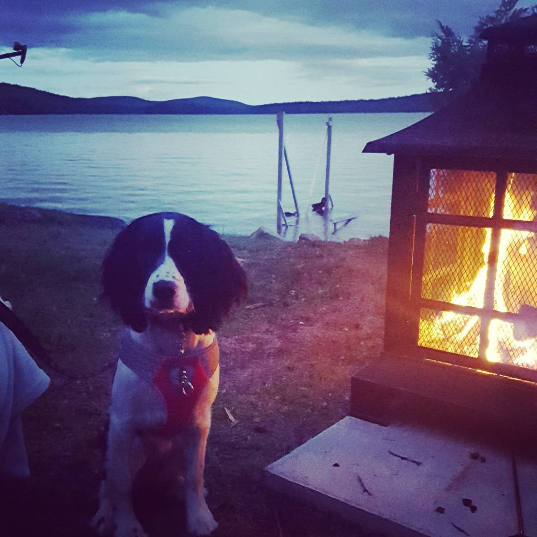 Skiff the dog at  So nice to be able to safely have a camp fire.    ...