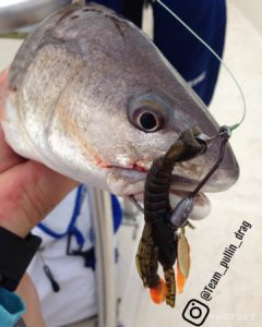 Redfish caught with Crawdadz in Green Pumpkin/orange claws