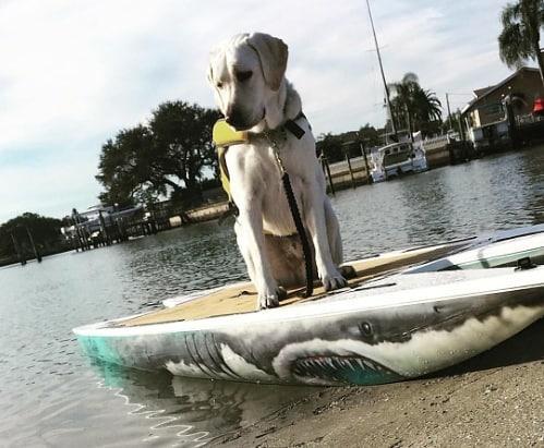 Paddledog!