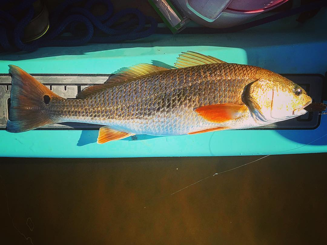 It was a grind on the river for me, as it usually is, but I caught a couple uppe