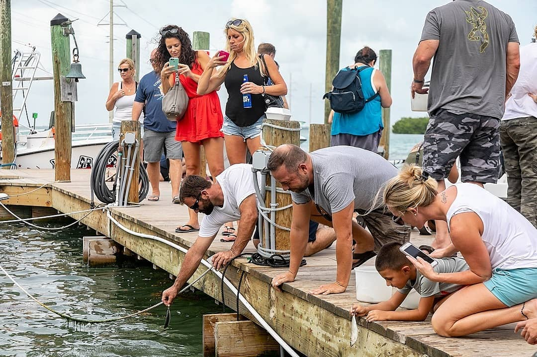 Grab some lunch then head out to the docks to feed the Hungry Tarpon.