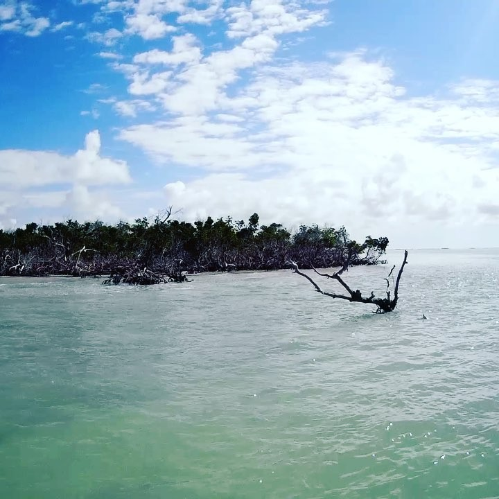There is something magical about the backcountry of the Florida Keys.  It's aliv