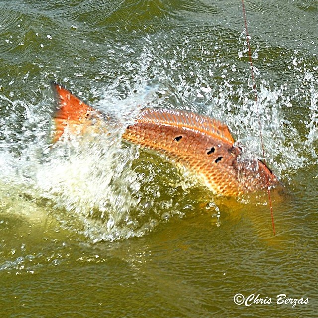 Chris Berzas comes up with one of the coolest redfish shots we've seen