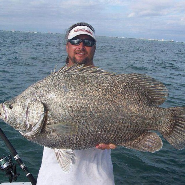 UNREAL tripletail out of Port Canaveral with Captain Scott Lum with Outcast
