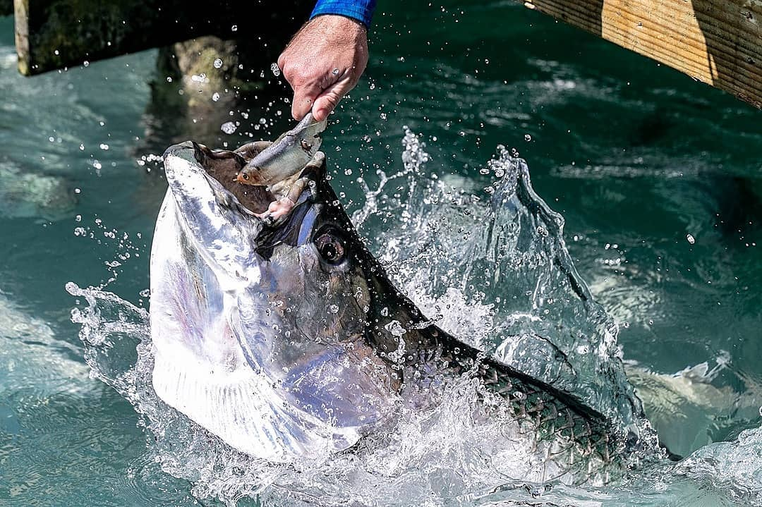 Do not let your self be hungry as these Hungry Tarpon, stop on by and enjoy a de