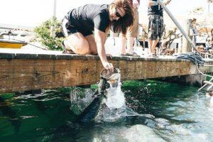 Florida Keys Hungry Tarpon.