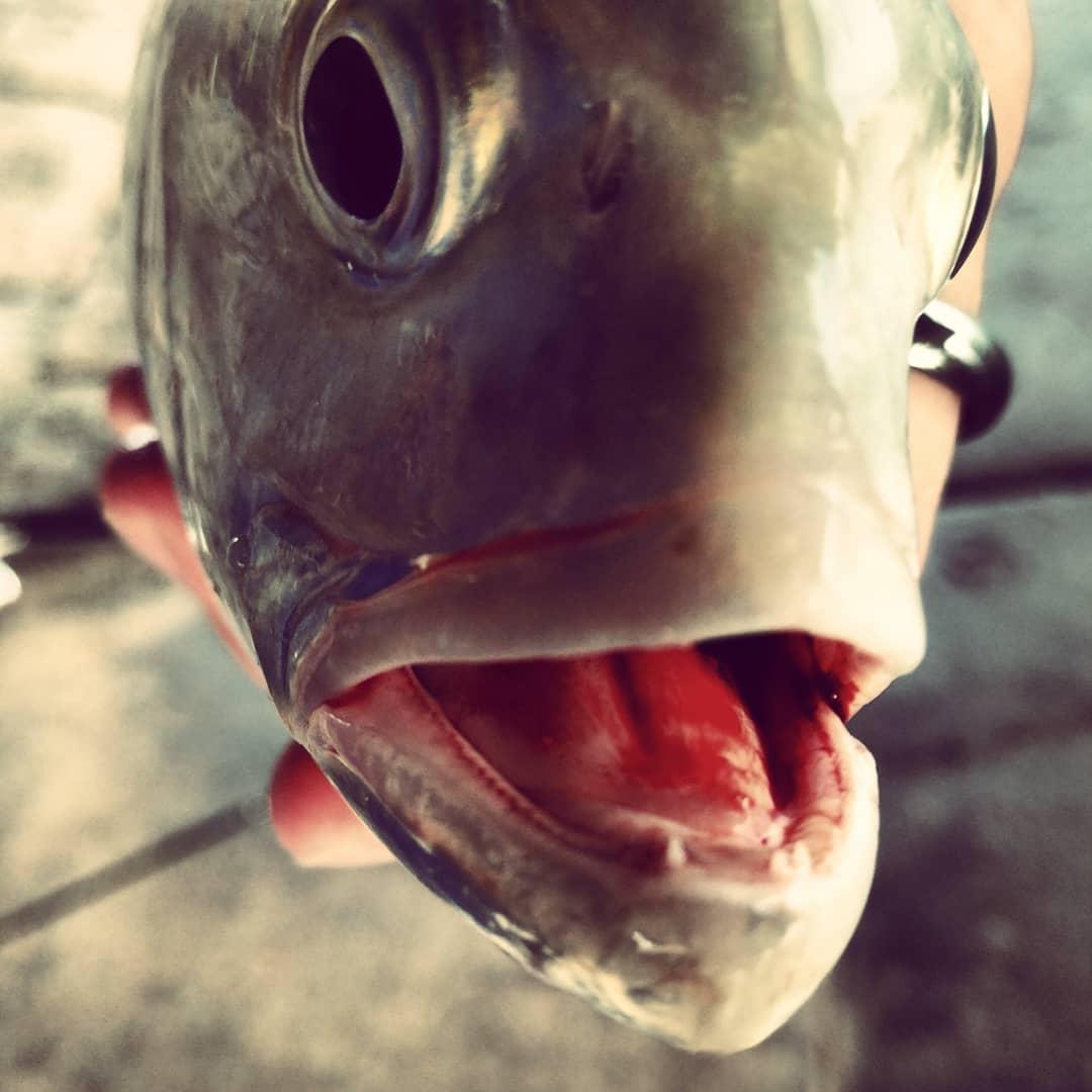 FishStalkerz BaitHouse Dunedin, Florida 727.484.0784  Go check this place out, s