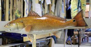 Amazing Redfish Mount