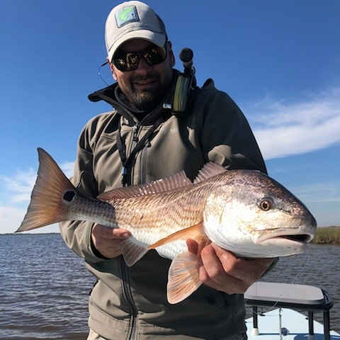 Chunky redfish today, slow moving, and fairly easy to feed.