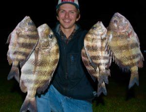 Night Sheepshead Fishing? Got 'em!