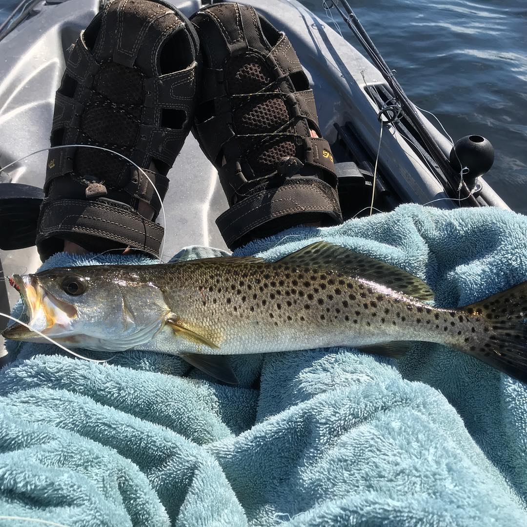 Speckled Trout on the fly from my Kayak. Caught about a dozen in the flats in up
