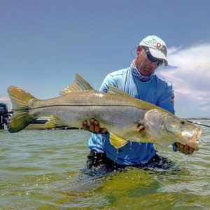 Awesome snook