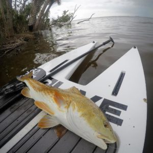 Those stormy summer day redfish tailers