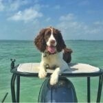 Warm weather and clear sky's make for a perfect skiff dog Sunday  :