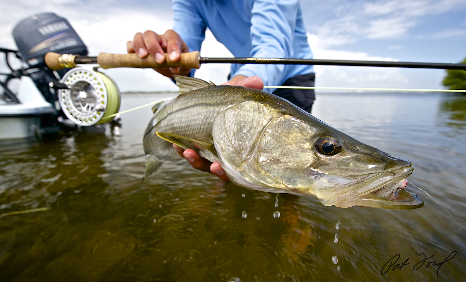 The florida everglades by way of flamingo with pat ford for Fishing for snook
