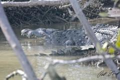 crocodile-flamingo-everglades-fishing-pat-ford-skiff-life.jpg