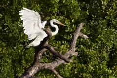 egret-flamingo-everglades-fishing-pat-ford-skiff-life (2).jpg