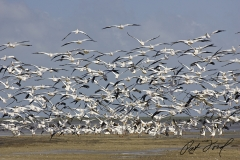 flock-birds-flamingo-everglades-fishing-pat-ford-skiff-life.jpg
