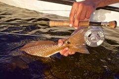 redfish-flyfishing-flamingo-everglades-fishing-pat-ford-skiff-life.jpg