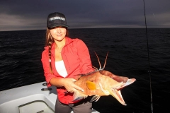 hogfish-night-fishing.jpg