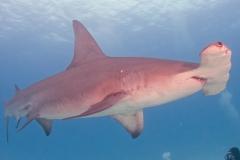 sharks-photos-pat-ford-1-1