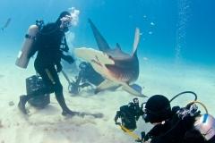 sharks-photos-pat-ford (12).jpg