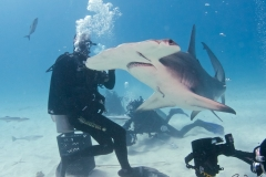 sharks-photos-pat-ford (13).jpg