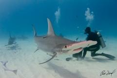 sharks-photos-pat-ford (14).jpg