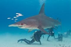 sharks-photos-pat-ford (15).jpg