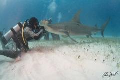 sharks-photos-pat-ford (19).jpg