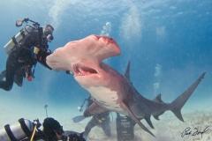 sharks-photos-pat-ford (20).jpg