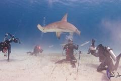 sharks-photos-pat-ford (23).jpg