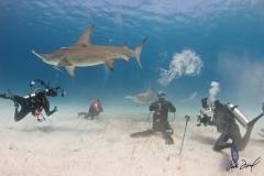 sharks-photos-pat-ford (24).jpg