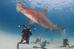 sharks-photos-pat-ford (25).jpg