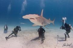 sharks-photos-pat-ford (26).jpg