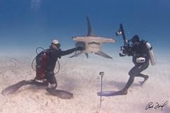 sharks-photos-pat-ford (27).jpg