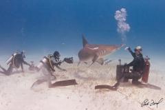 sharks-photos-pat-ford (28).jpg