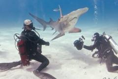 sharks-photos-pat-ford (31).jpg