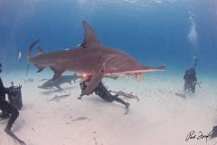 sharks-photos-pat-ford (32).jpg