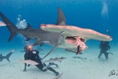 sharks-photos-pat-ford (33).jpg