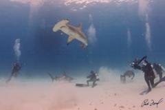 sharks-photos-pat-ford (36).jpg