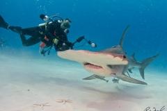 sharks-photos-pat-ford (39).jpg