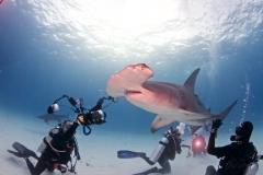 sharks-photos-pat-ford (40).jpg