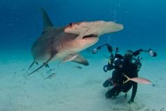 sharks-photos-pat-ford (41).jpg